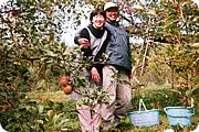 三原りんご園